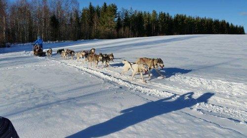 Comenius Finsko - 3. den - Husky safari
